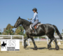 Traditional Equitation School For Horse Back Riding