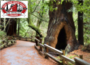 Muir Wood & Sausalito Tour